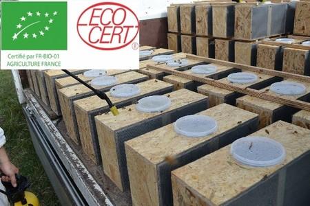 QUANTITE LIMITE - Essaims Nus Buckfast®  production Agriculture Biologique