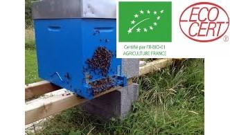 QUANTITÉ LIMITE -Essaims sur cadres de l'année issu de l'agriculture biologique